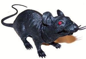rat.41KlEnBFy1L.-SX300-1-.jpg